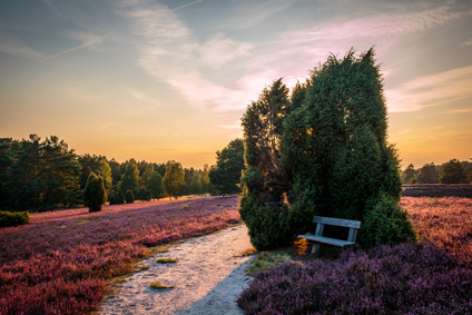 Lüneburger Heide © Thorin Media - Fotolia.com